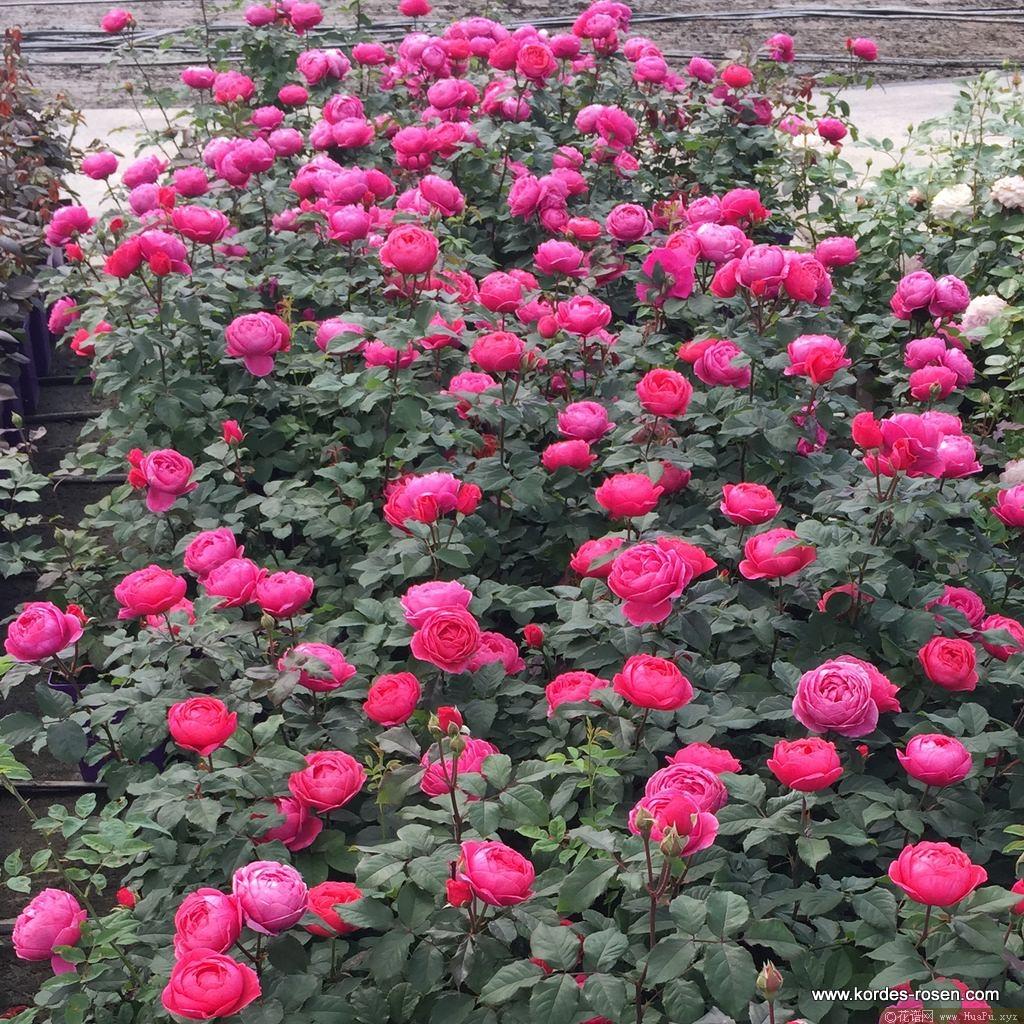 花园公主玛丽何塞